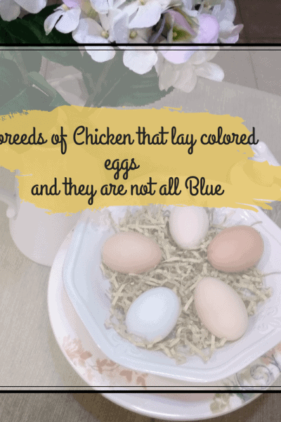 colored eggs in a bowl