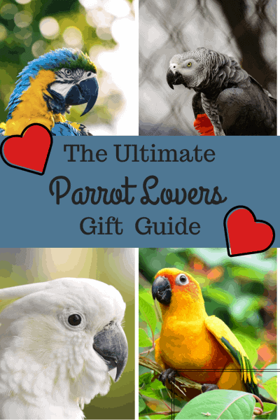 Parrot lovers gift guide pin