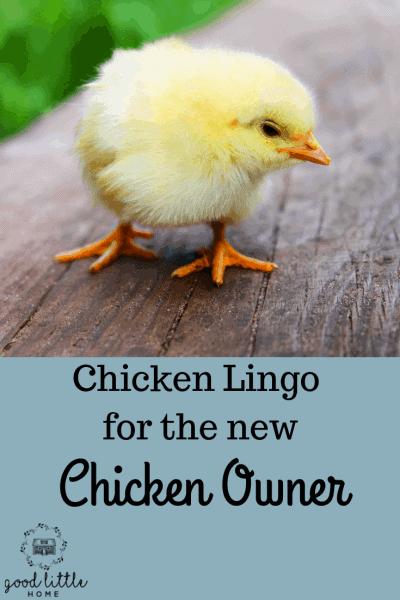 Chicken Lingo (1)