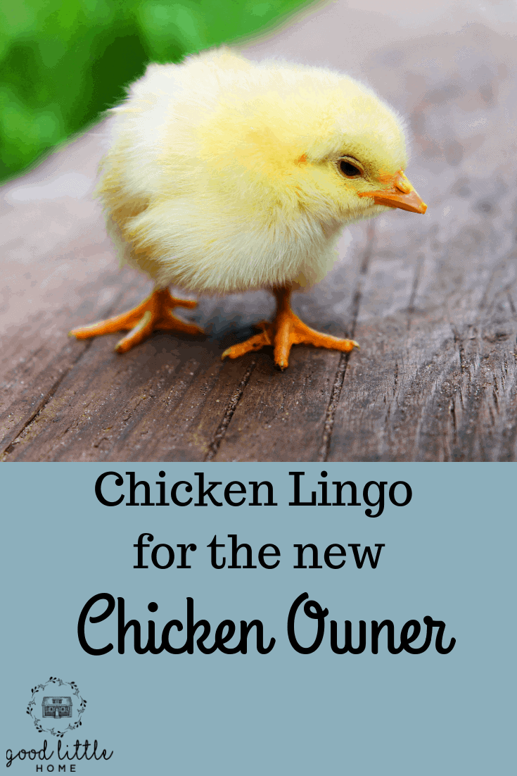 A New Chicken Keepers Guide to Vocabulary