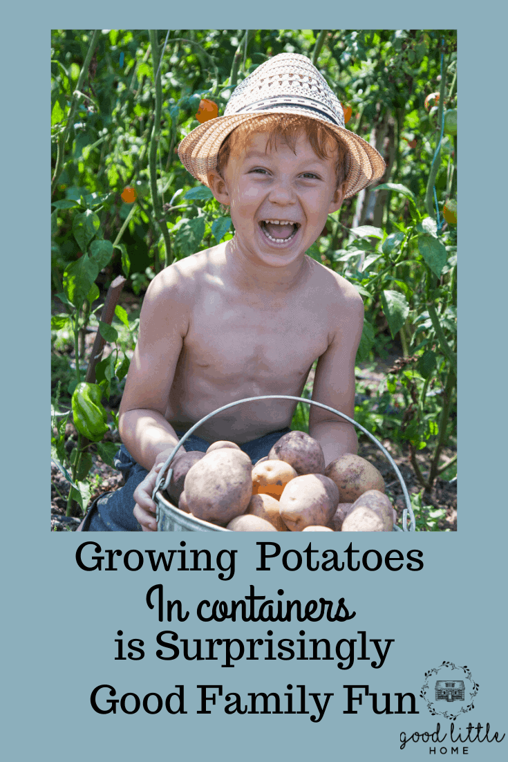 Growing Potatoes in Containers is Surprisingly Good Family Fun